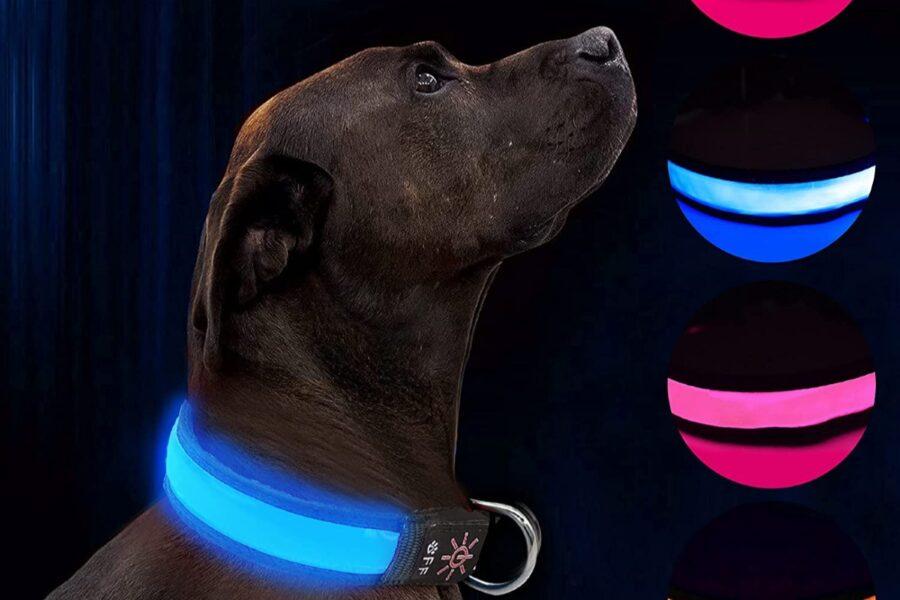 cane con collare colorato