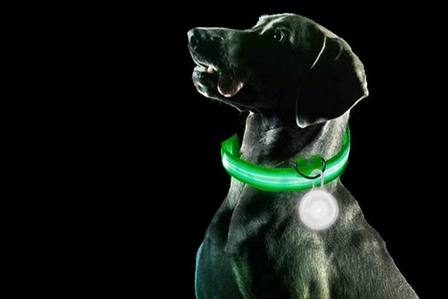 cane con medaglietta luminosa