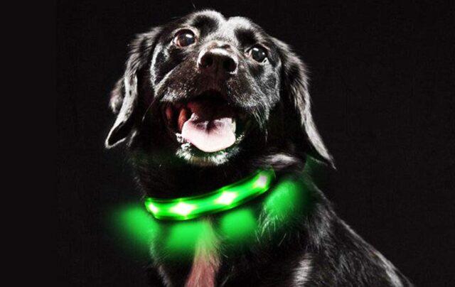 cane con collare luminoso