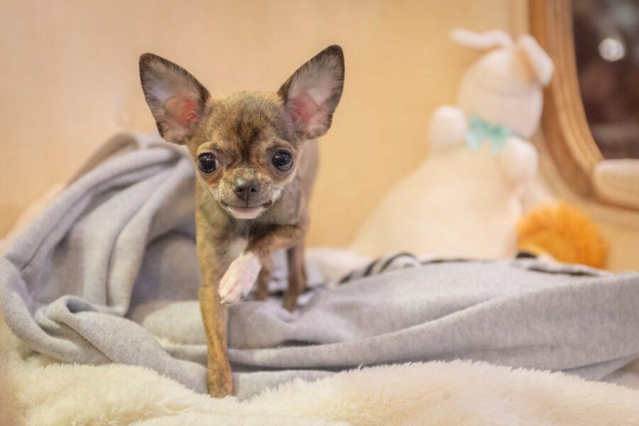 cucciolo piccolo