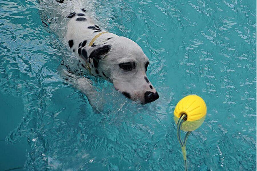 cane che gioca in acqua