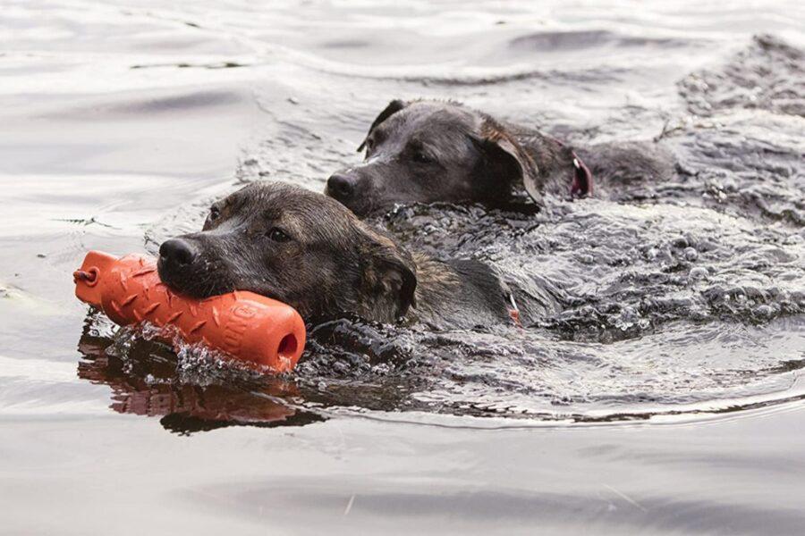 cani che giocano in mare