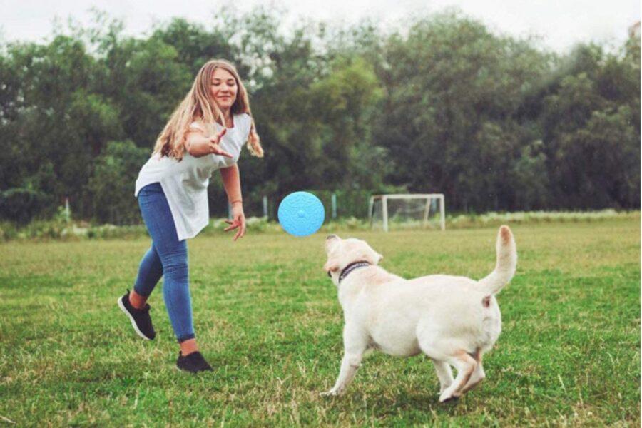 cane che gioca col frisbee