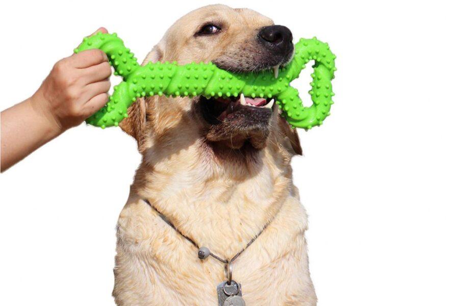 giocattolo per cane grande