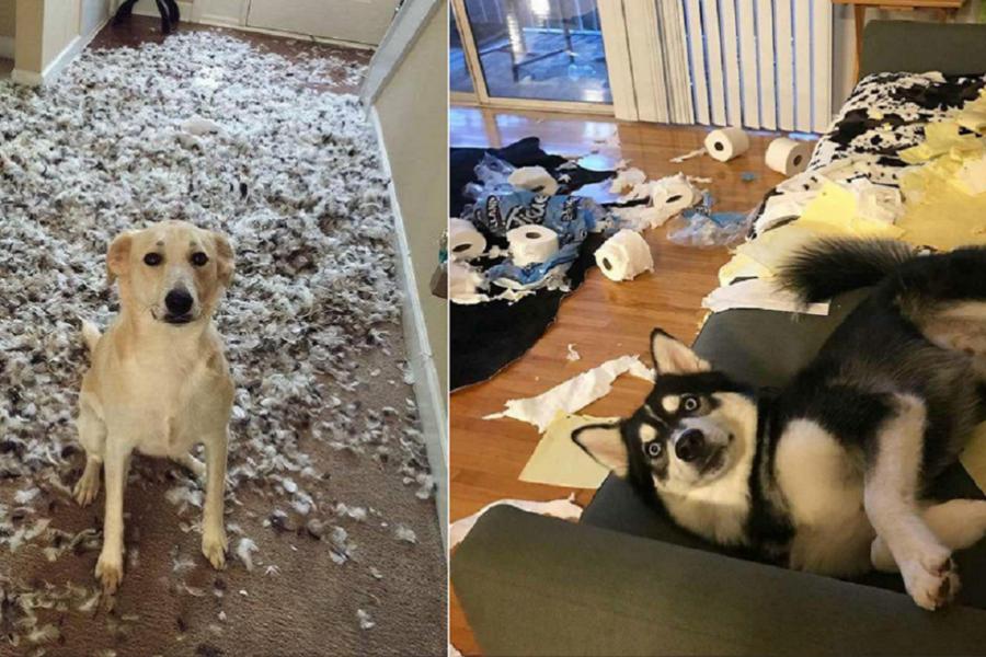 cani che combinano disastri