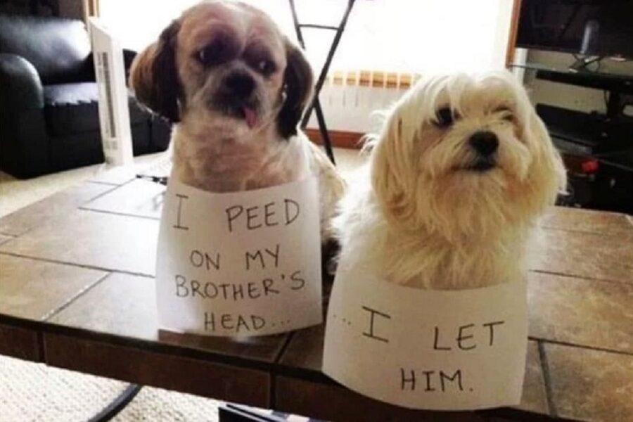 cuccioli di cane combinano guai