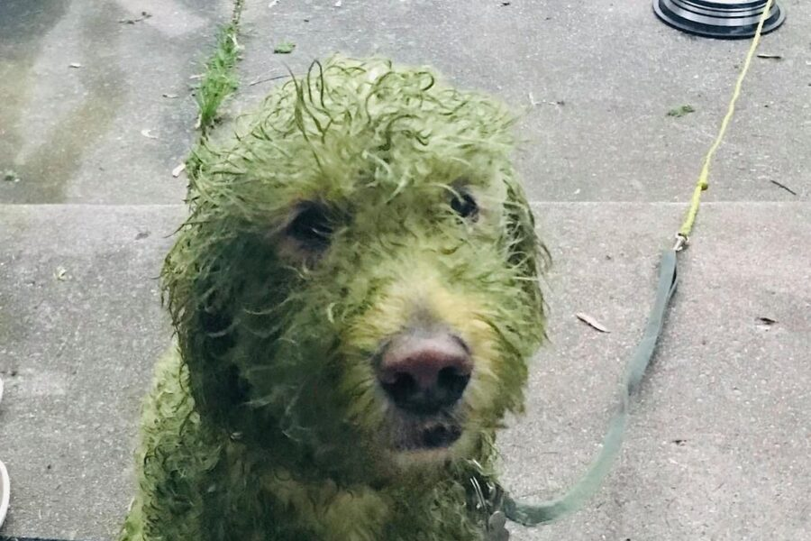 cane bianco sporco di erba