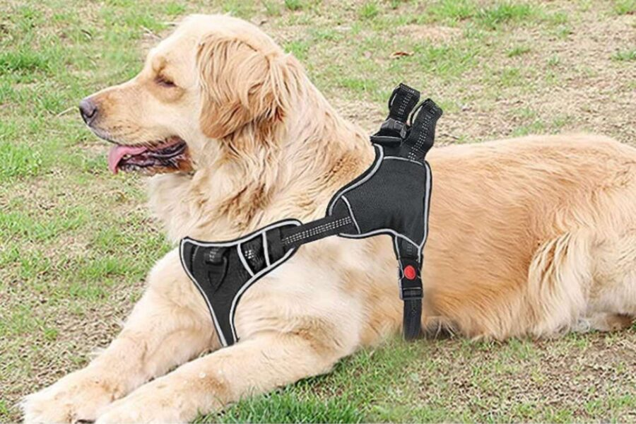 cane con pettorina