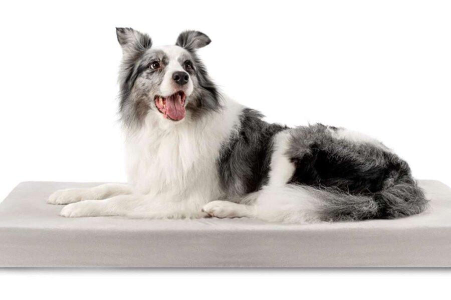 materasso per cane anziano