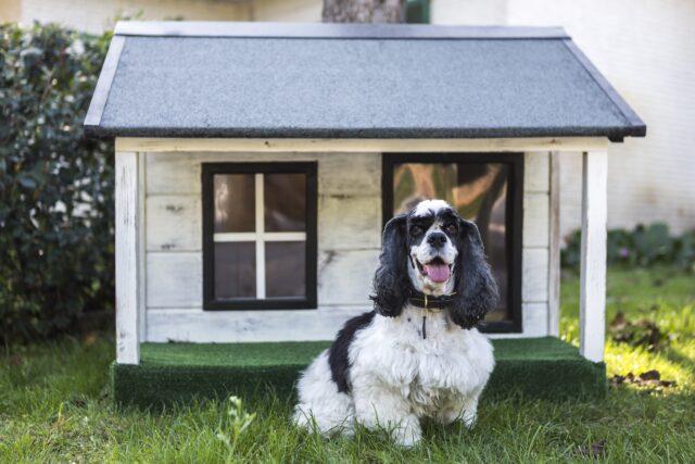 cane davanti alla cuccia