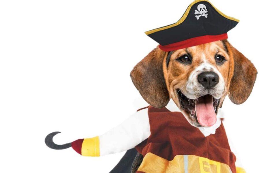 cane pirata