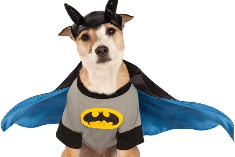 cane travestito da batman