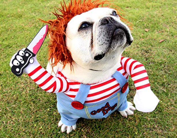 costume di carnevale per il cane