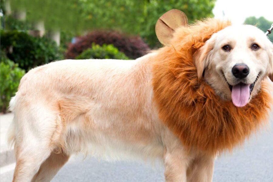 cane travestito da leone