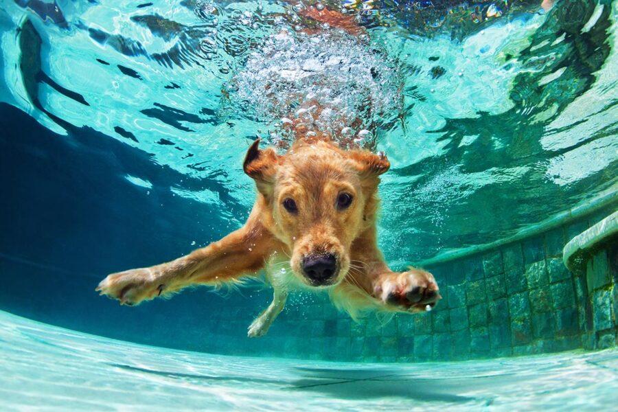cucciolo di cane in piscina