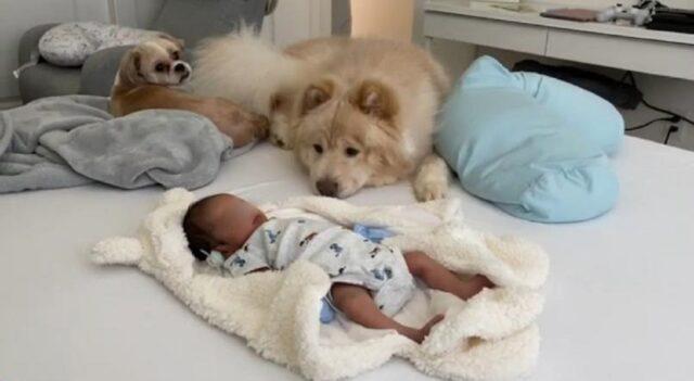 tre dolcissimi cani incontrano un neonato