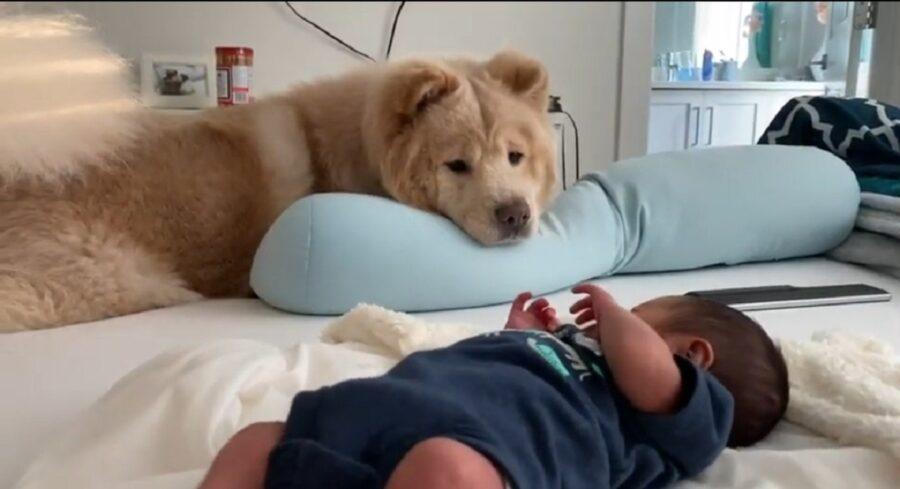 dolcissimi cani incontrano un neonato per la prima volta