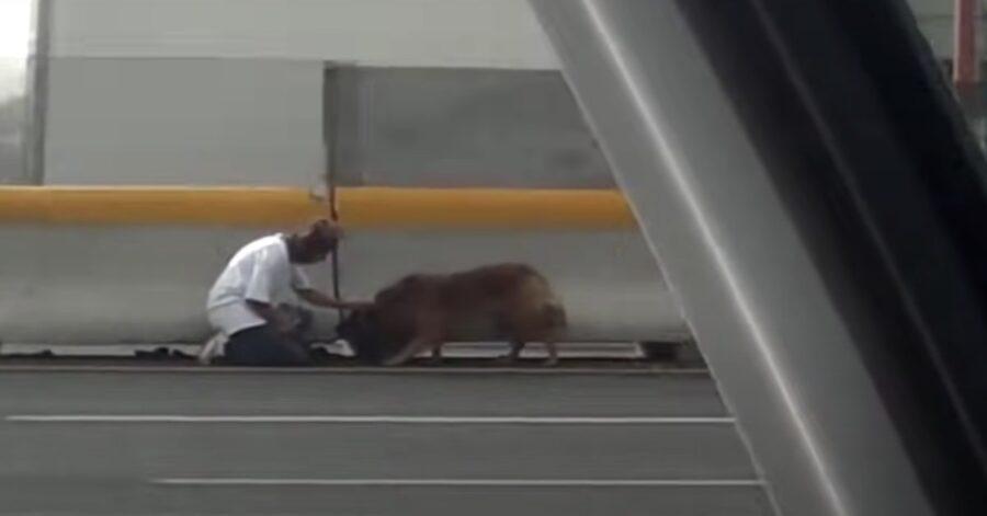 cane salvato da una donna messicana