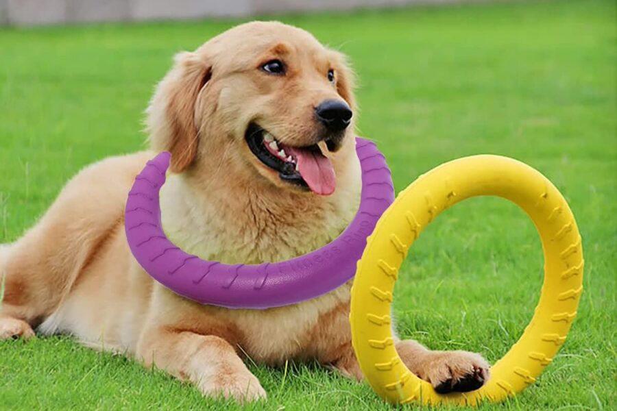 anello volante per cane