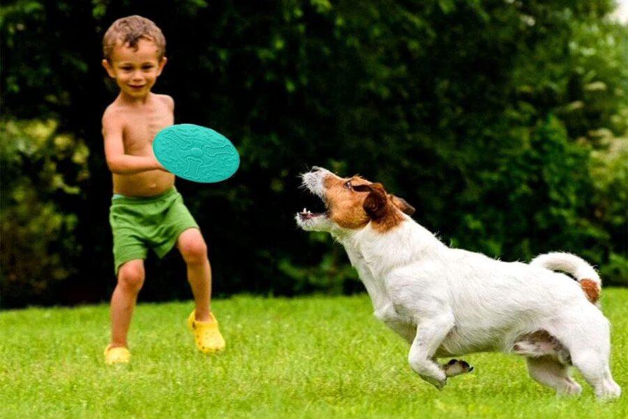 cane gioca con il frisbee