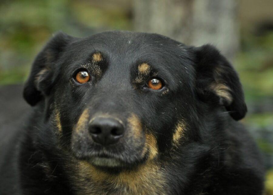 cucciolo pelo macchiato marrone