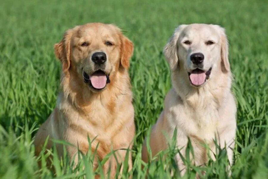 cani in mezzo all'erba