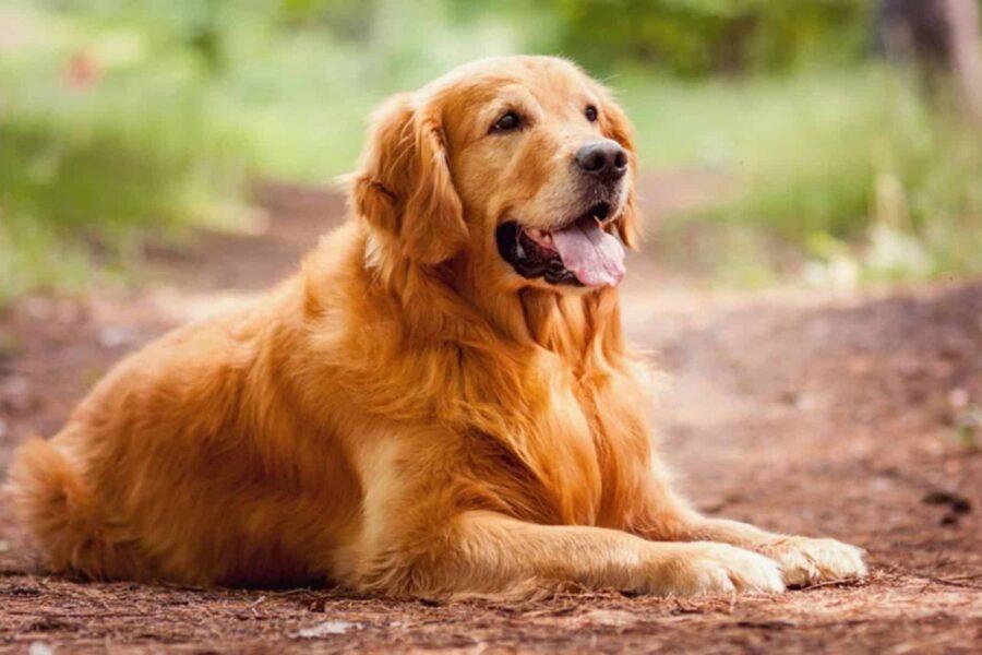 cane all'aria aperta