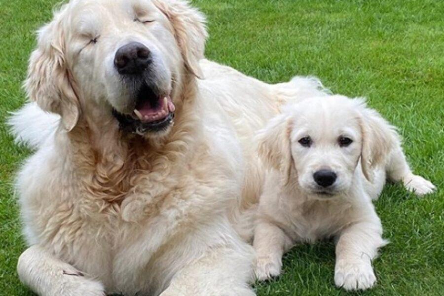 cani mamma e figlio
