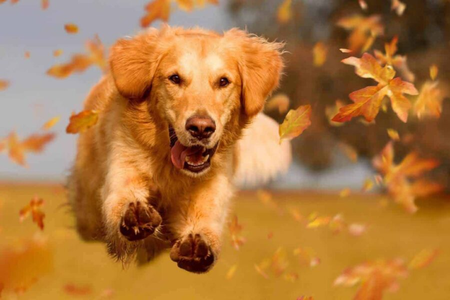 cane in autunno