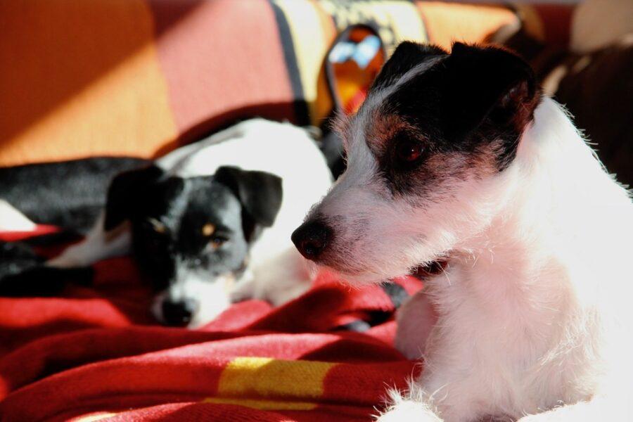 cani sul letto