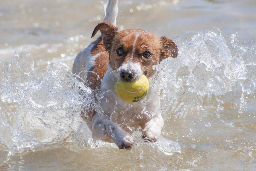 cane al mare con la palla