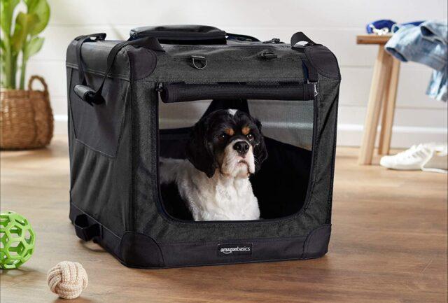 cane in un trasportino morbido