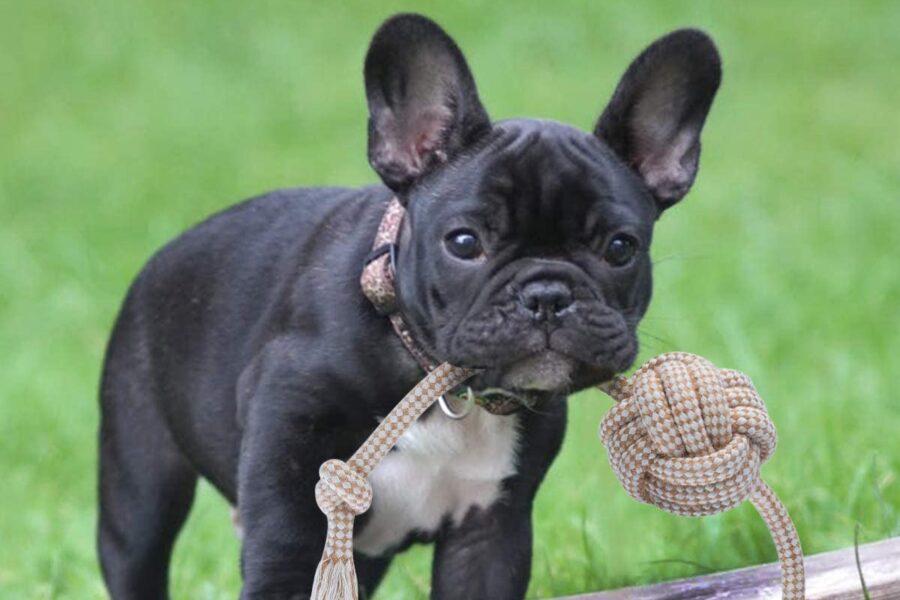 cane tiene corda fra i denti