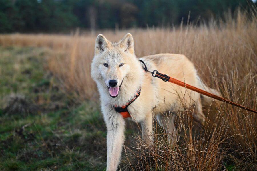 cane al guinzaglio nella natura