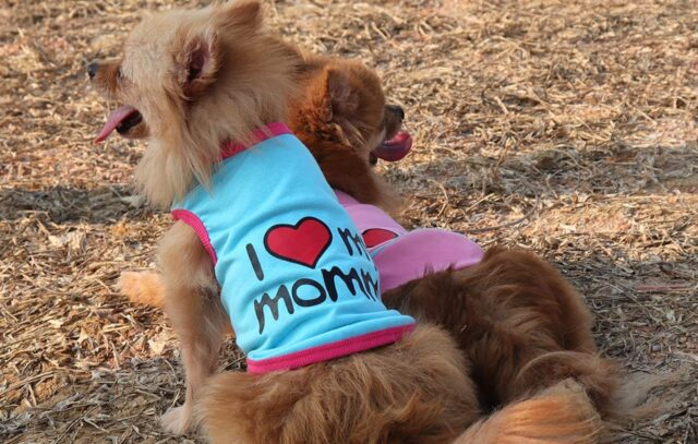 cani con le magliette