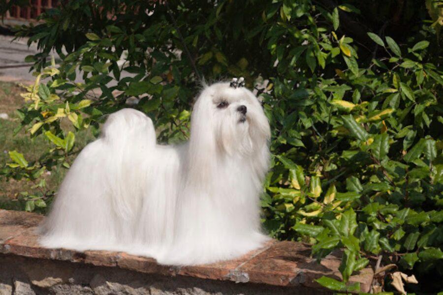 cane al sole