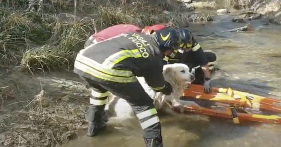 maremmano viene salvato dai pompieri