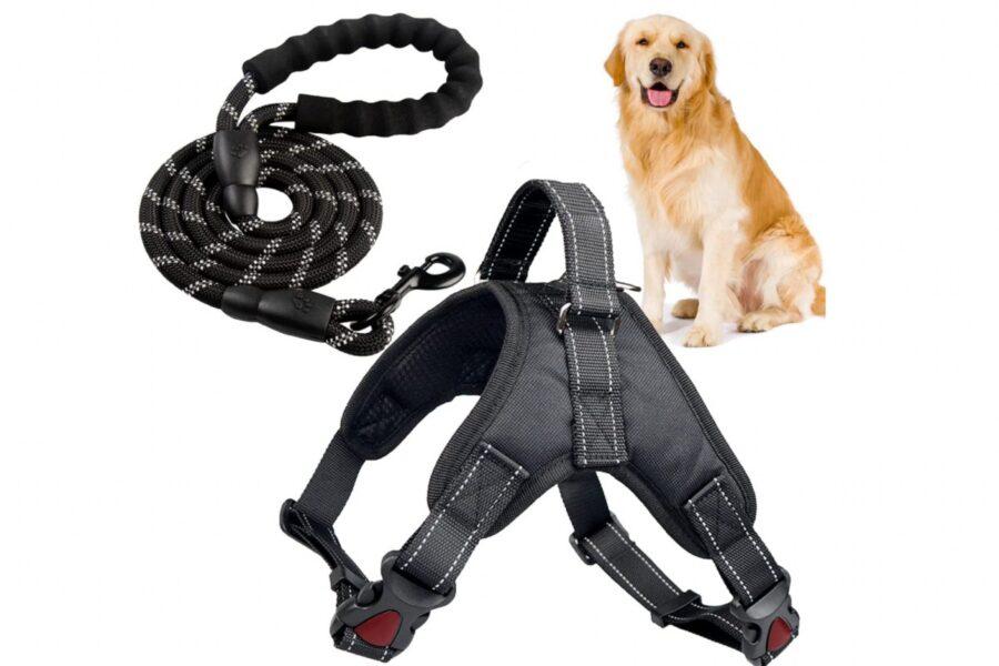 pettorina e guinzaglio per cani