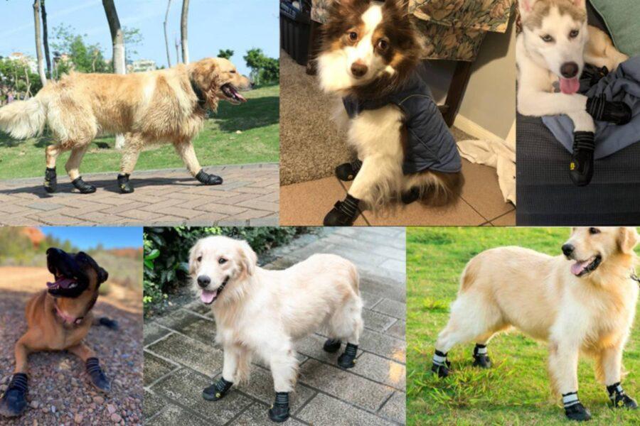 cani con le scarpe