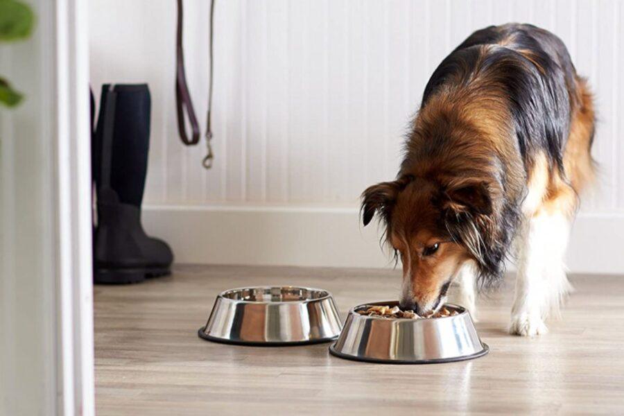 ciotole di acciaio per cani