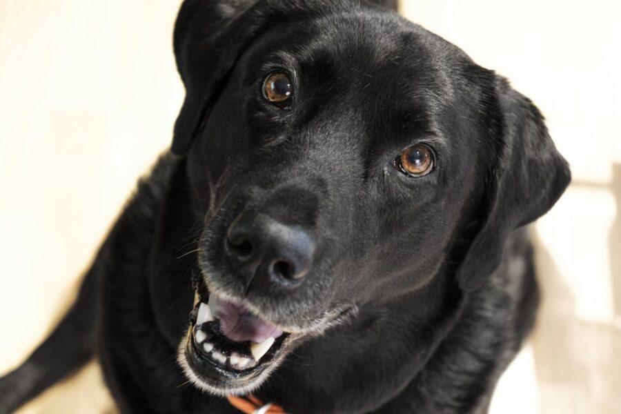 cane nero felice