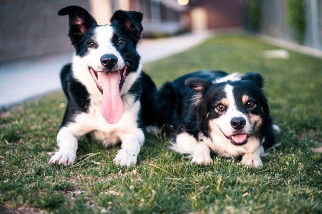 cani in giardino
