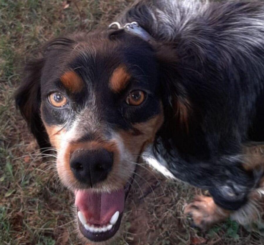 cucciola di cane sorridente