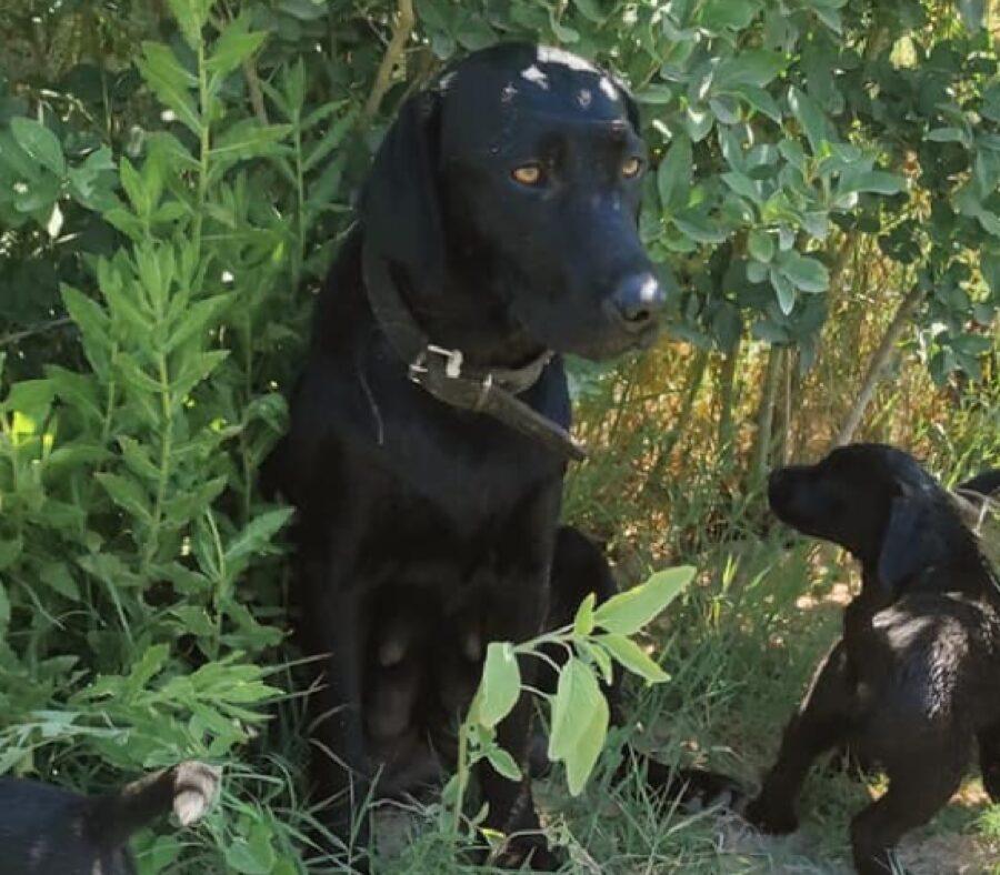 cane mamma con altri cuccioli