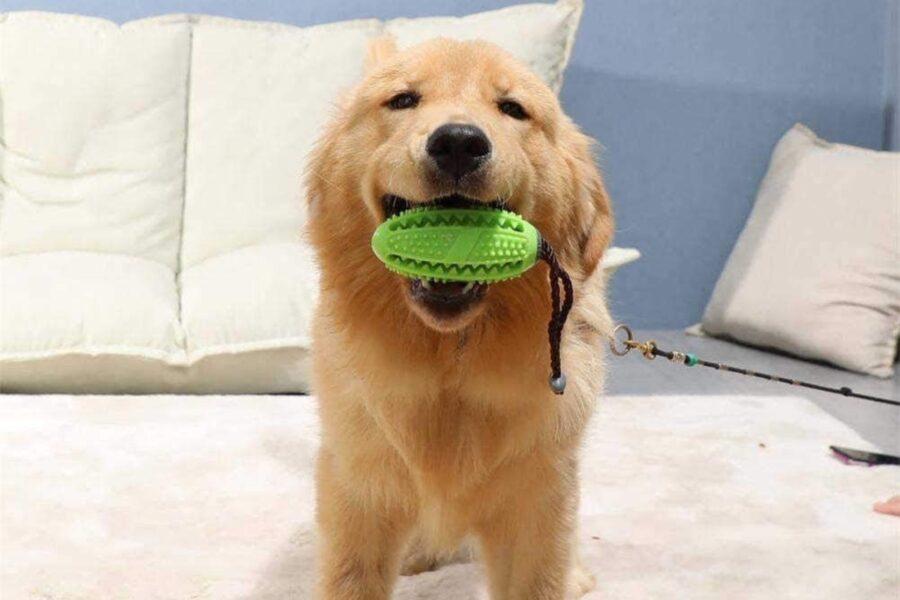 pallina ripiene di crocchette per cane