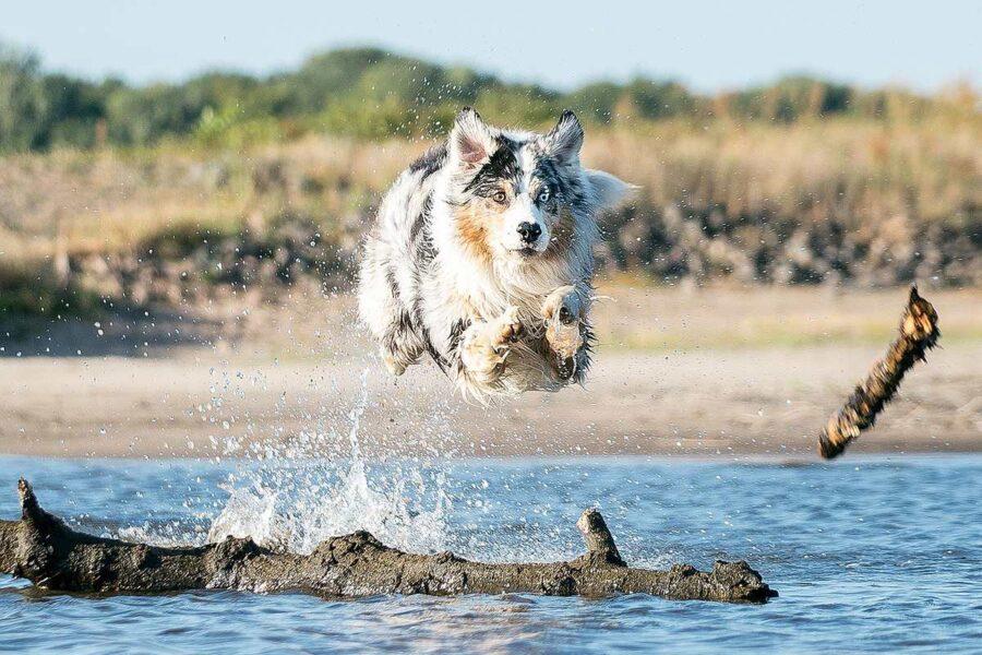 cane che salta in acqua