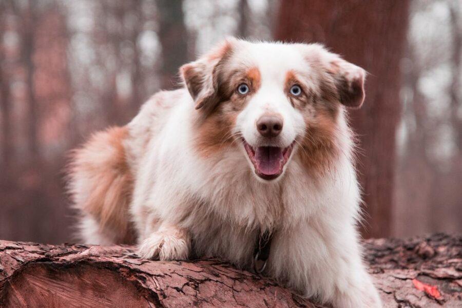 cane su un tronco