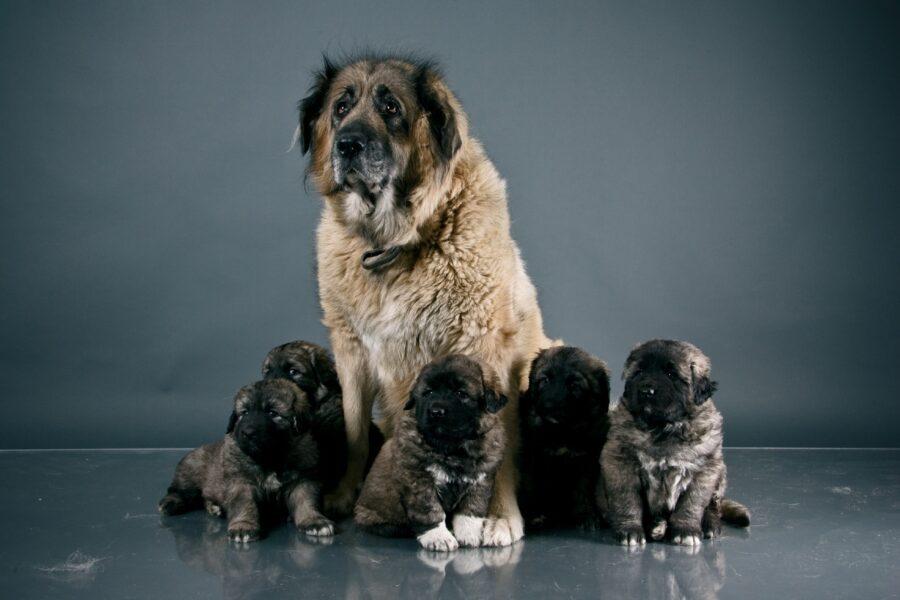 mamma e cuccioli di cane