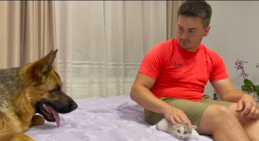 pastore tedesco incontra gattina appena nata