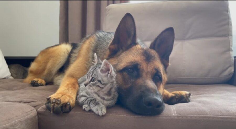 è nata un'amicizia